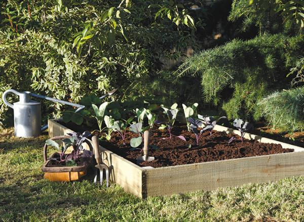 Growing Your Own Vegetables for Beginners
