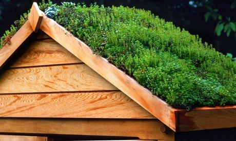 Add a Green Roof to Your Shed