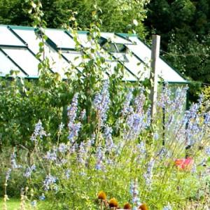How to Choose the Right Greenhouse