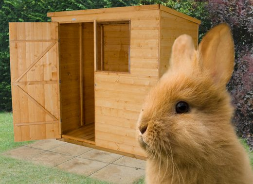 Sheds For Bunnies